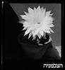 פרח – הספרייה הלאומית