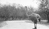 Animals in the Ramat gan Zoo – הספרייה הלאומית