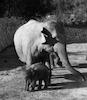 The Ramat Gan Safari welcomed the newly born resident, the elephant baby – הספרייה הלאומית