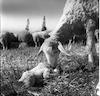 כבשה לאחר המלטה – הספרייה הלאומית