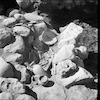 חפירות ארכיאולוגיות – הספרייה הלאומית
