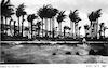 דקלים בחוף חיפה – הספרייה הלאומית