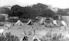 מחנה צופים – הספרייה הלאומית