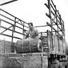 בוב פרנק מוריד חביות מהאוטו – הספרייה הלאומית