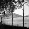 ביער – הספרייה הלאומית