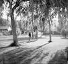 חברות על הדשא הגדול מתחת לעצים – הספרייה הלאומית