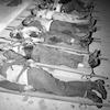 הרצח במעלה עקרבים – הספרייה הלאומית