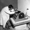 הסיסמוגראף אוגוסט – הספרייה הלאומית
