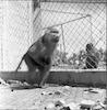 תמר בגן חיות; פורים – הספרייה הלאומית