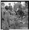 """התיישבות ביהודייה ע""""י רסקו, 1949 – הספרייה הלאומית"""