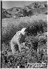 גדנע בבאר אורה, 1/1951 – הספרייה הלאומית
