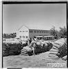 בית ספר חקלאי, מגדיאל, 7/1951 – הספרייה הלאומית
