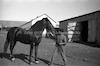 סוס וחלוץ, קיבוץ תל-יוסף