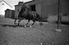 סוס, קיבוץ תל-יוסף